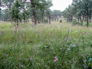 The preserve has very high quality oak savanna and prairie ecosystems.