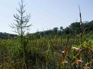 The site includes a large, high quality bog.