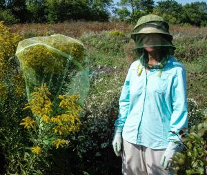 Nancy with a netting-enclosed cluster of goldenrod tops holding some Forbes's tree crickets. Nancy is the one on the right (small joke).