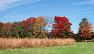 The beautiful subtle browns of the prairie grasses are upstaged by the brilliant maples and other trees.