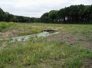 The focus of the project is this stream, once a straight ditch, now improved with meanders and streambed improvements.
