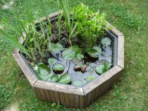 The container holds water lilies and a few emergents.