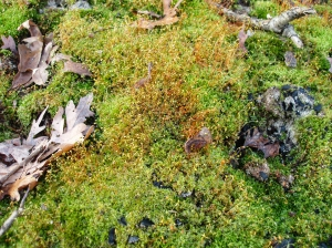 Here, a beautiful moss colony became established on an old burn scar.