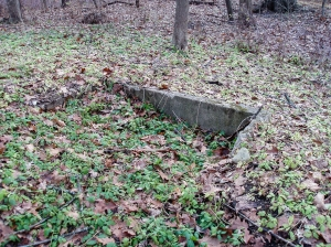 One discovery was this old concrete foundation of a small building close to the preserve's Winfield Road boundary.