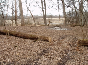 The cleared area extends north to the open zone along the stream.
