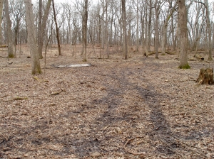 Continuing a counterclockwise turn, this view shows the extent of the clearing. The pale area is an ash pile where cut brush was burned.
