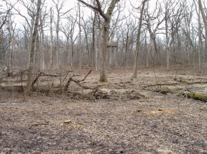 A final view shows some of the large oaks that dominate this forest.