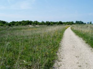 Another good sand area is Illinois Beach State Park. Here a trail goes through the zone behind the fore dunes.