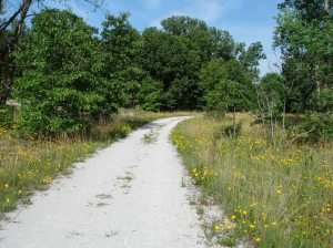 The Marquette Trail at Indiana Dunes National Lakeshore passes beautiful marsh and sand savanna habitats.