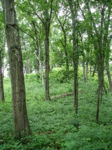The Lulu Lake Nature Preserve in Walworth County, Wisconsin, has become a favorite site. Here a woodland graces a kame.
