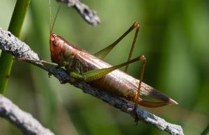 Profile view of a female.