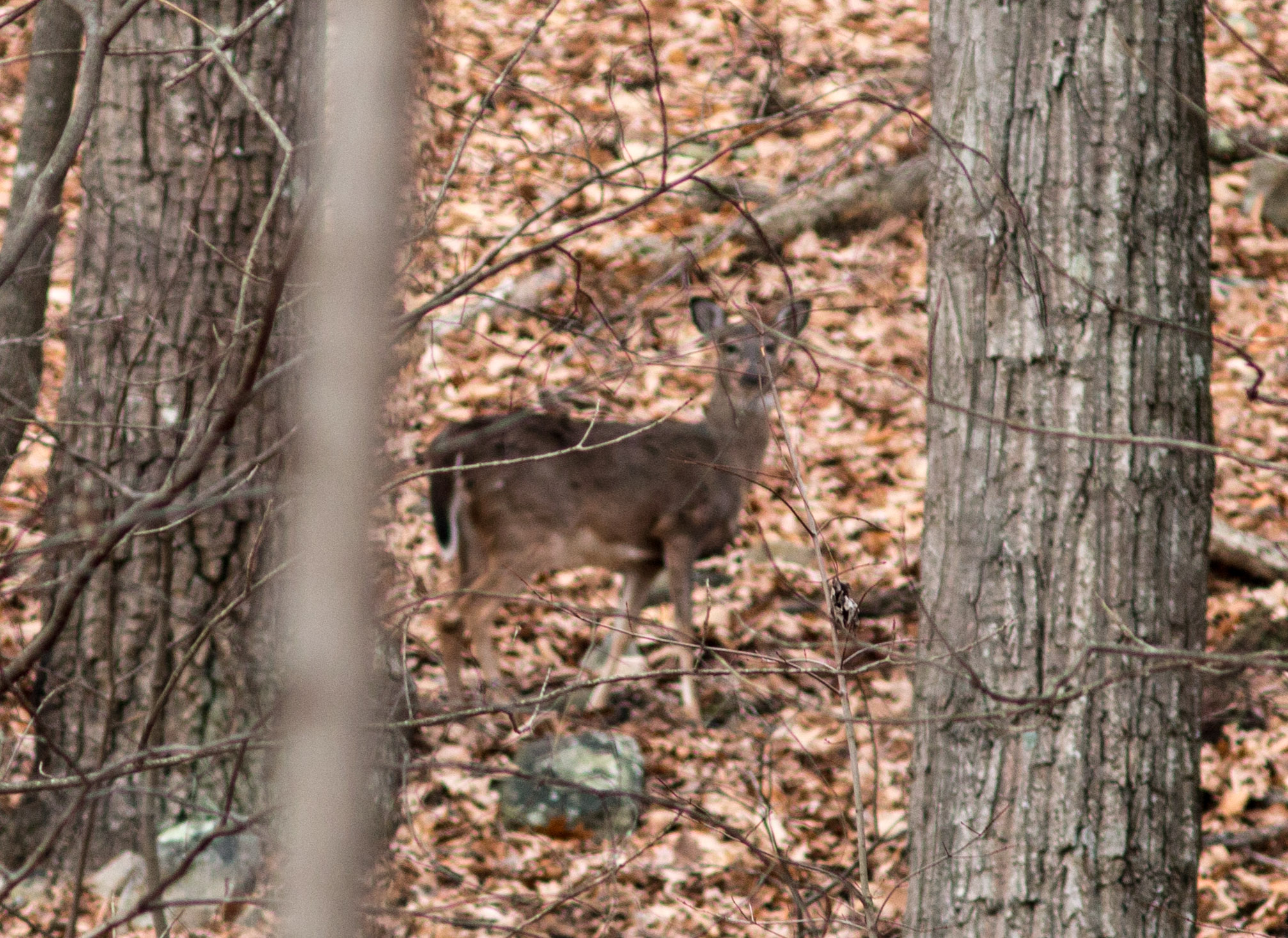 we minutes patrick fairfield little buck next a boss was to surprised feeders she s on the work about trails category cutting feeder deer wanted worked lyla said i but it because