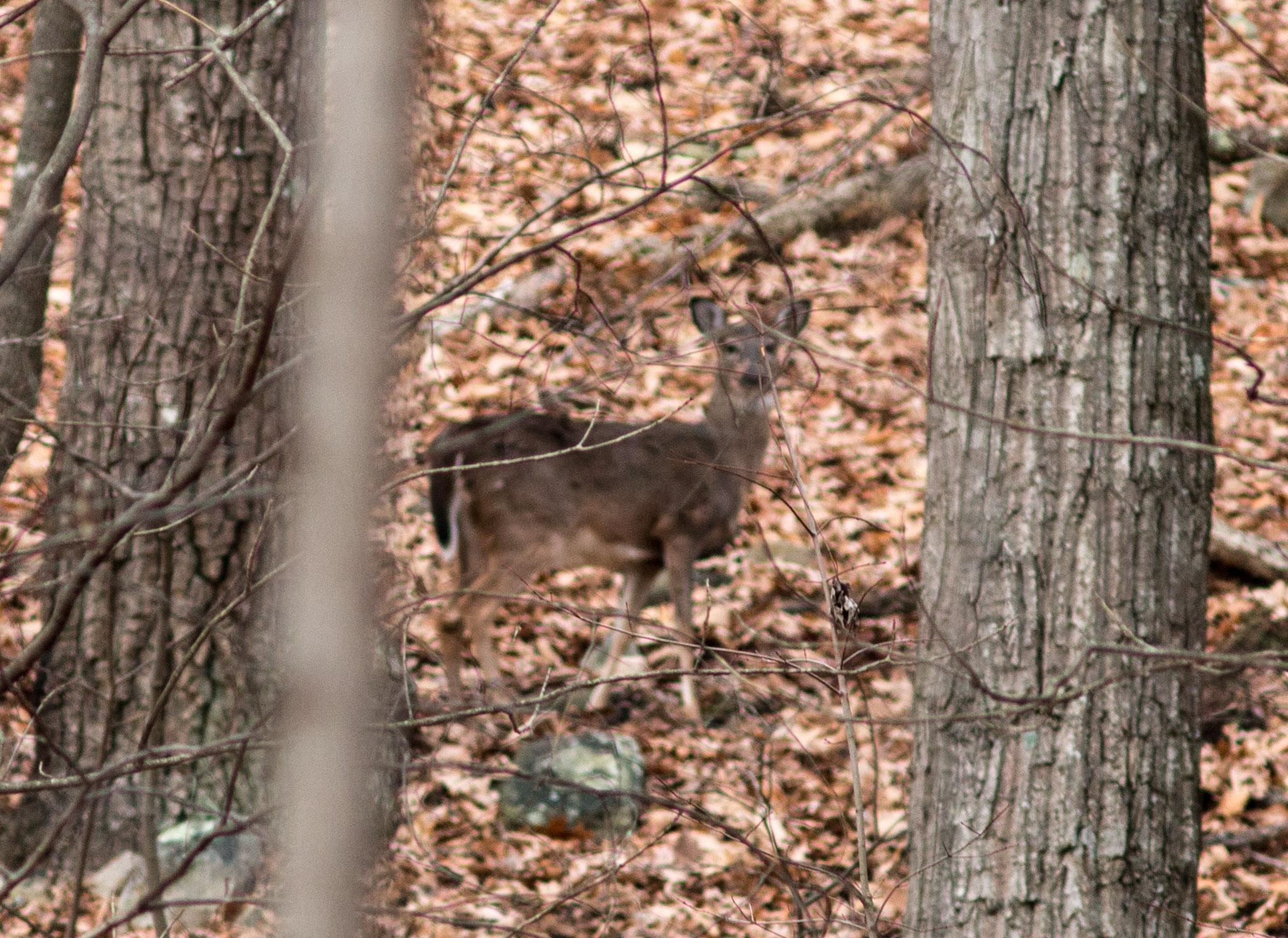 boss video cuddeback deer cameras feeder scouting buck galleries gallery photo feeders